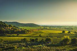 Italie - Vignoble du Chianti